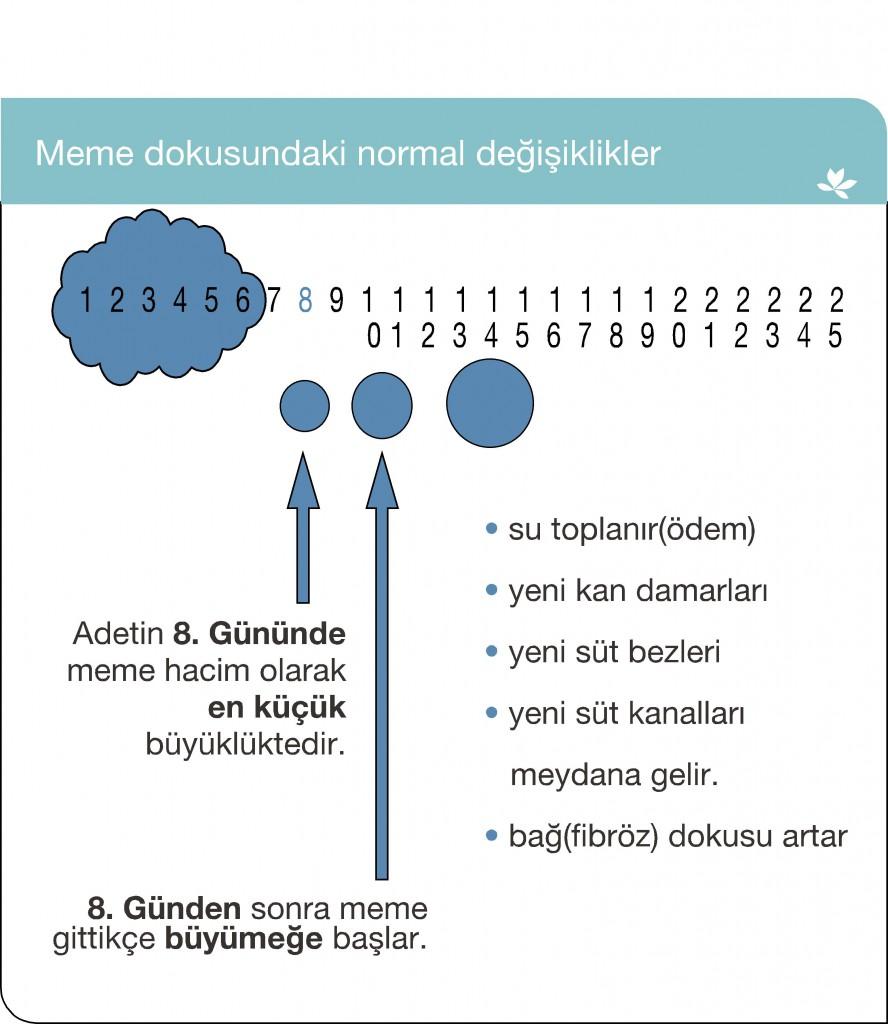 memeder_02